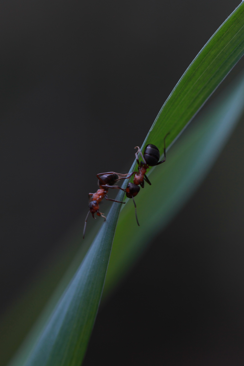 #муравьи
