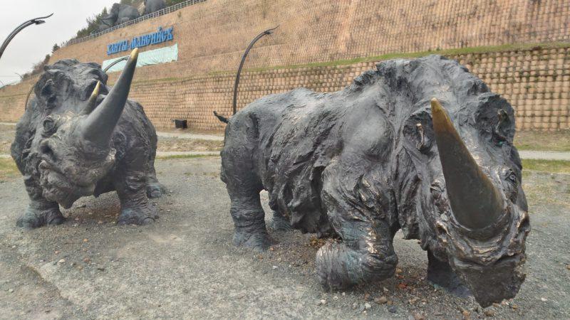 #мохнатые-носороги