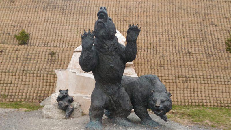 #медведи
